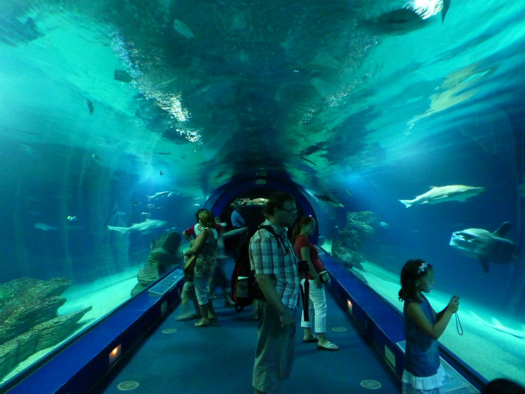 Aquarium, L'Oceanografic, Valencia, Spain